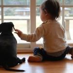 狂犬病の悲劇:中国では犬に近づかない!予防接種は必須